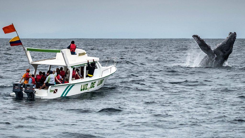 Cuenca-Spa-Guayaquil Branch Tour-Whale Watching-Lima Branch-Cusco-Machu Picchu-Titicaca-Arequipa